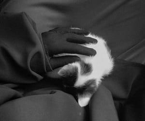 catlover, niqabicatlover, and niqabigloves image