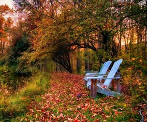autumn, bench, and fall image