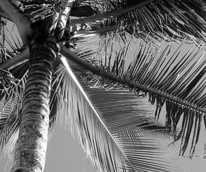 ocean, sea, and palmtrees image