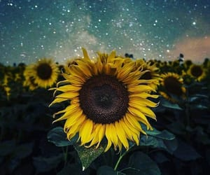 nature, sunflower, and sky image