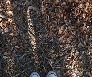 autumn, converse, and hojas image