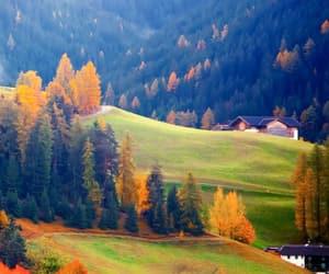 arboles, relax, and naturaleza image