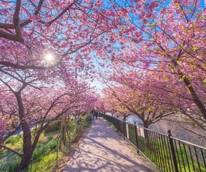 cherry and spring image
