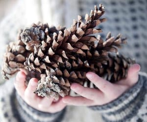 aesthetic, pine cone, and snow image