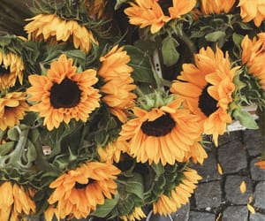 aesthetic, flowers, and sunflowers image