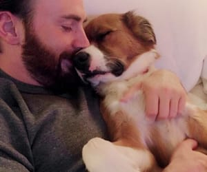 chris evans and dog image