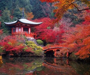 japan, red, and nature image