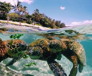 turtle, animals, and ocean image