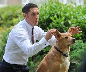 dog and tom hardy image