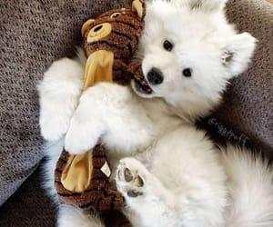 animals, dog, and perro image