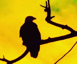 bird, photography, and silhouette image