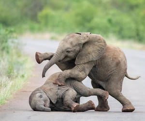 animals, baby animals, and elephants image