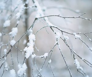 branches, nature, and snow image