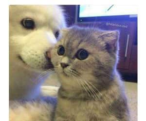 animals, cat eyes, and kitten image