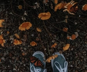 butterflies, Collage, and editing image