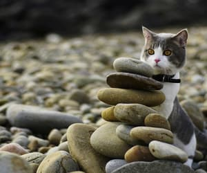eyes, kitten, and pebbles image