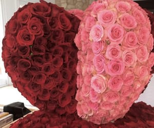 pink roses, red roses, and beautiful roses image