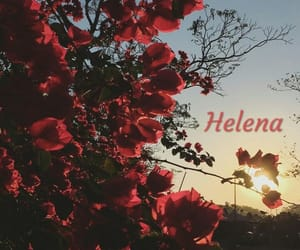 flowers, helena, and my chemical romance image