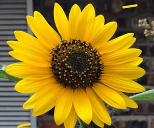 flores and yellow image