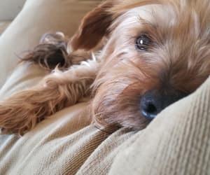 comfortable, dog, and sleep image