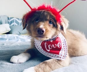adorable, pup, and puppy image