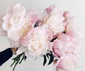 flowers, peonies, and gentle image