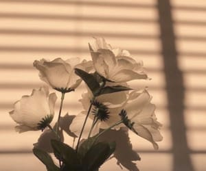 wallpaper, flowers, and sun image