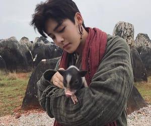 animal, asian, and boy image