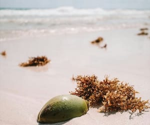 coconut, tropical, and vibes image