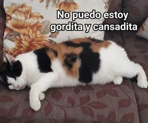animal, brasil, and cat image