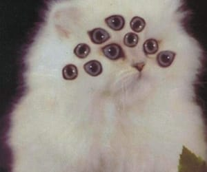 cat, alternative, and eyes image