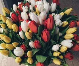 aesthetic, plants, and tulips image
