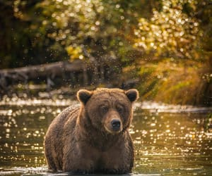animals and bear image