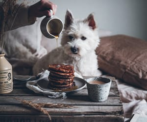 breakfast, dog, and pancakes image