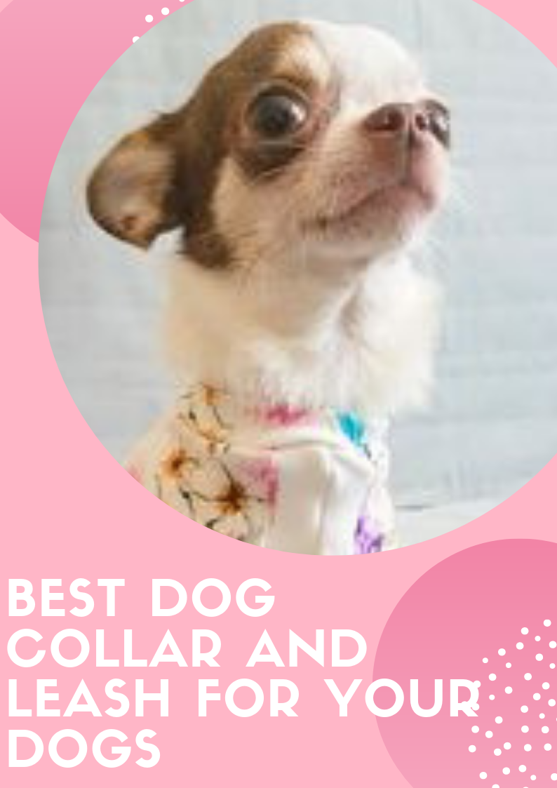 article and dogs fashion and leash image