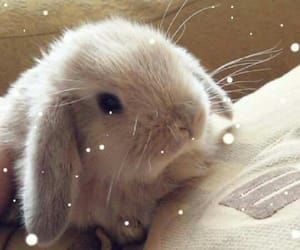 animal, baby, and lop image