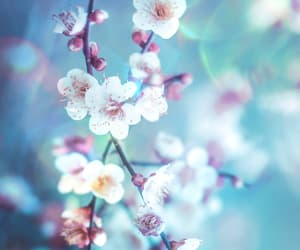 background, pastel, and pretty image