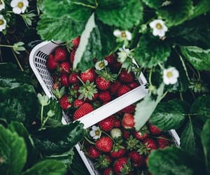 strawberries in a basket, nature's bounty, and from the garden image