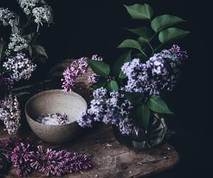 floral background, purple gift, and from the kitchen image
