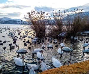 duck, Greece, and lake image