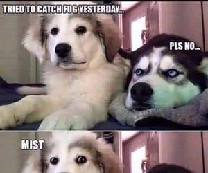 dog, dogs, and sassy image
