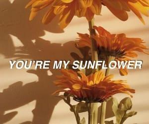 background, flowers, and Lyrics image