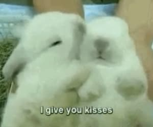 cute, bunny, and kiss image