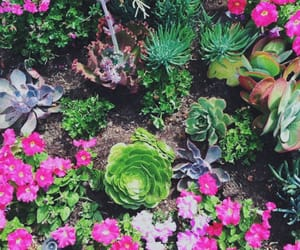 botanical, green, and succulents image