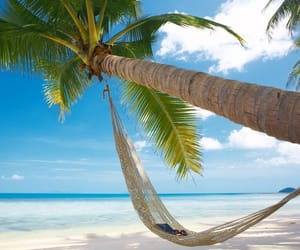 beach, hammock, and palm tree image