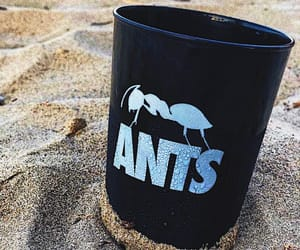 ants, colours, and ibiza image