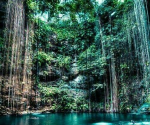 beautiful, exotic, and green image