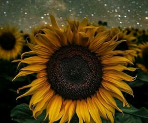 background, sunflower, and wallpaper image