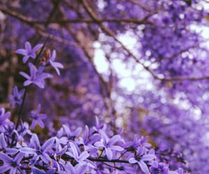 aesthetic, photo, and violet image