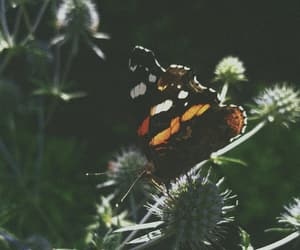 butterfly, details, and nature image